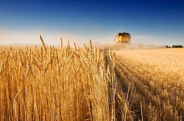 ハーヴェスト時間 - 収穫 ストックフォトと画像