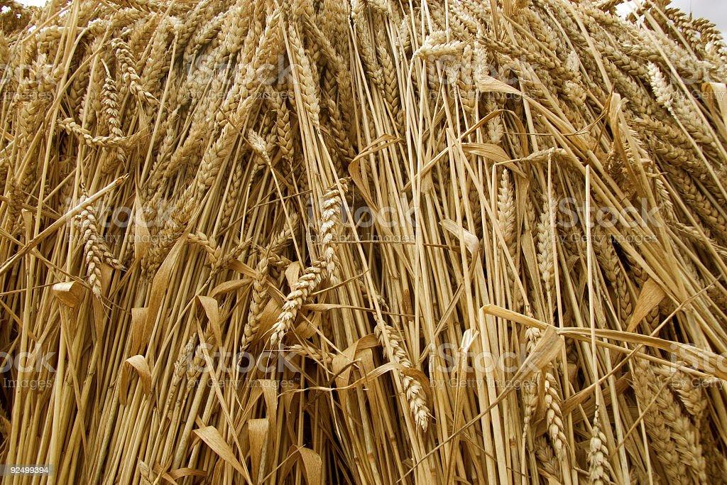 Harvest - wheat royalty-free stock photo