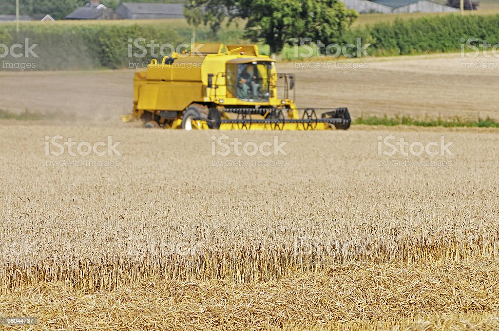 Harvest di lavoro foto stock royalty-free