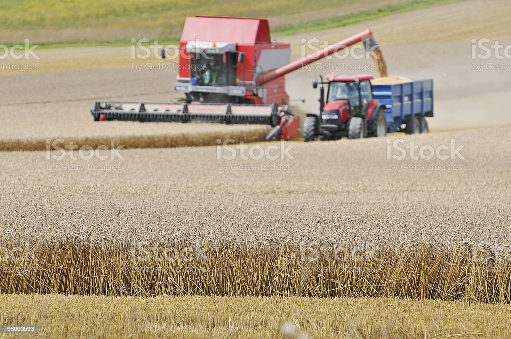 Harvest work royalty-free stock photo