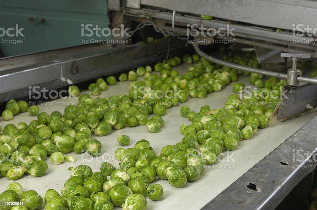 Probar Bruselas Sprouts en cinta transportadora - foto de stock