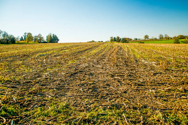 harvested corn field in Germany stock photo