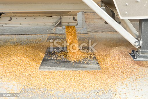 Recently harvested corn kernels are falling from a semi trailer into a grate at a grain storage elevator facility.http://www.banksphotos.com.c25.sitepreviewer.com/LightboxBanners/AgFarming.jpg