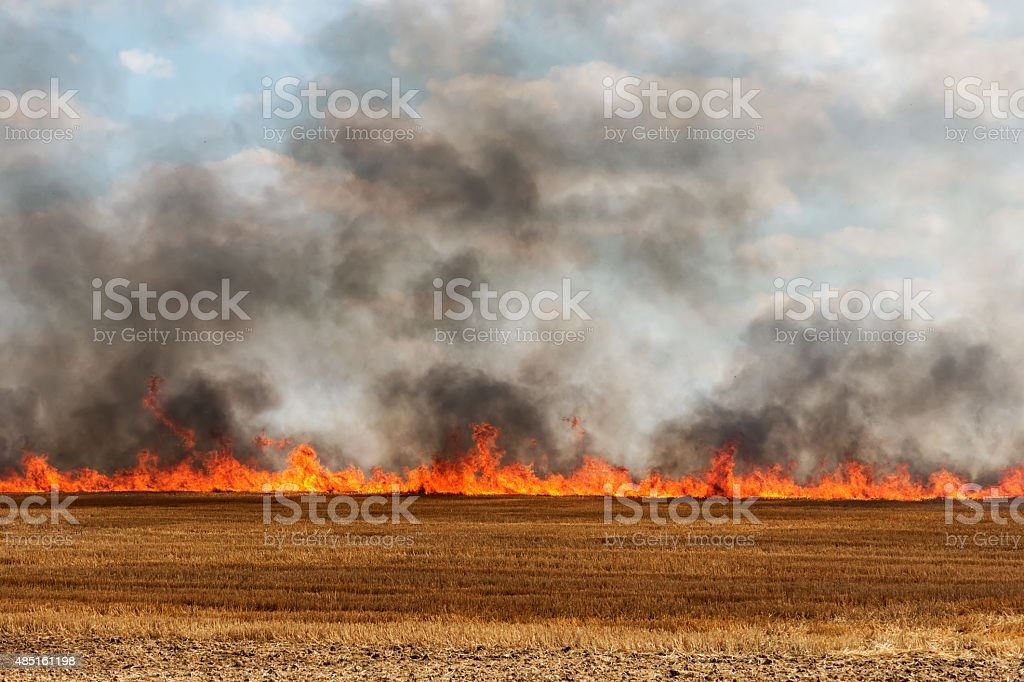 harvested field catching fire stock photo