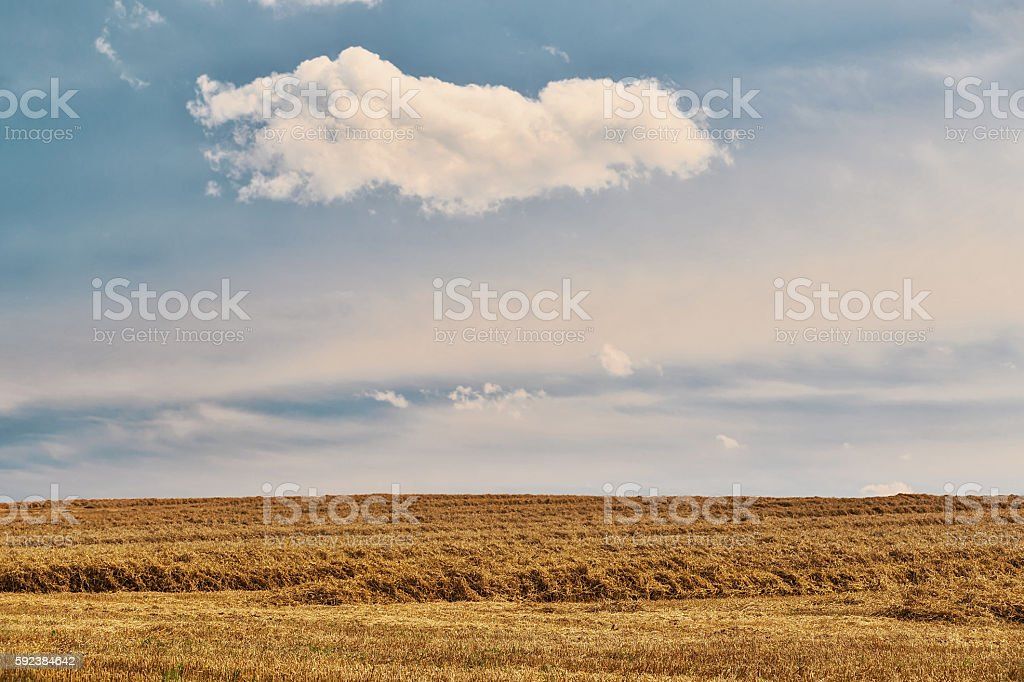 harvested field fith cloud on blue sky stock photo