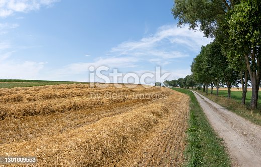 Small harvested field with rows of straw next to an idyllic dirt road with a row of trees