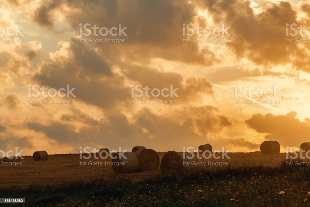 harvested field with straw bales in evening summer stock photo