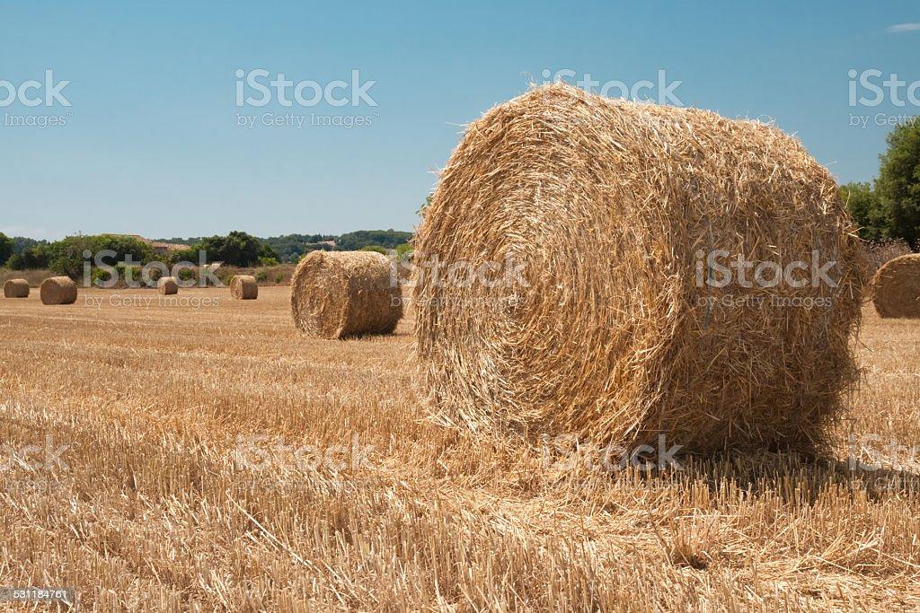 Ernte Feld mit Stroh bales in den Sommer Lizenzfreies stock-foto