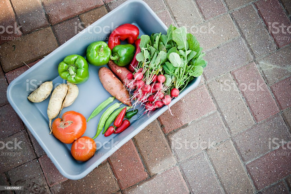 Harvested garden vegetables royalty-free stock photo