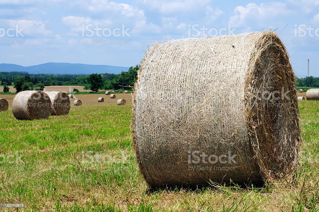 Harvested Hay Field royalty-free stock photo