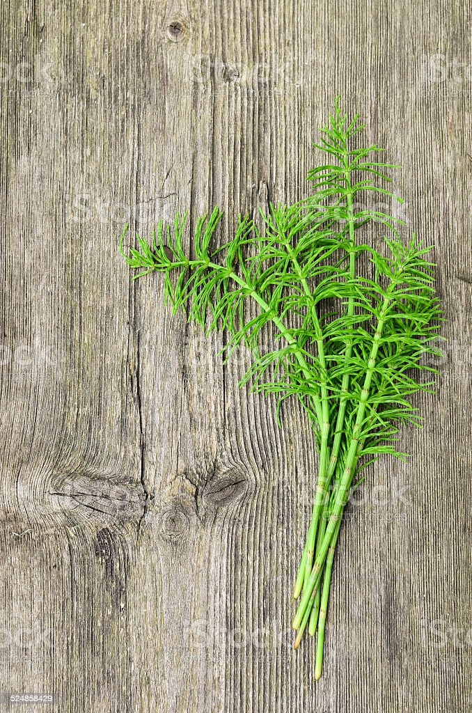 Harvested Horsetail stock photo