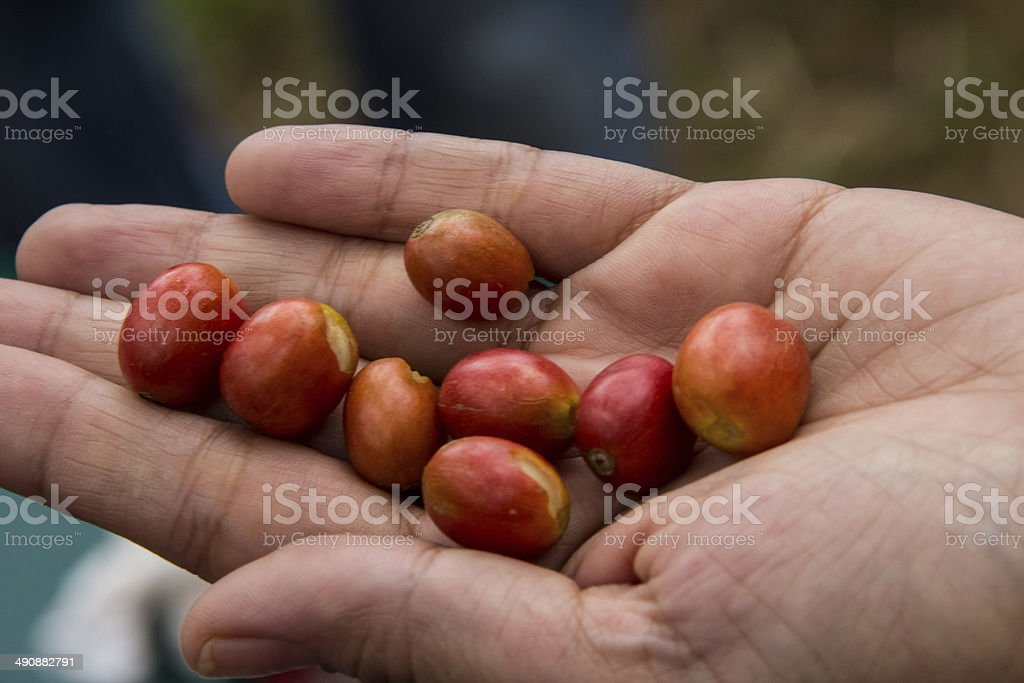 harvested stock photo