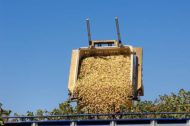Probar con pistacho se cargan en transferencia de tráiler - foto de stock