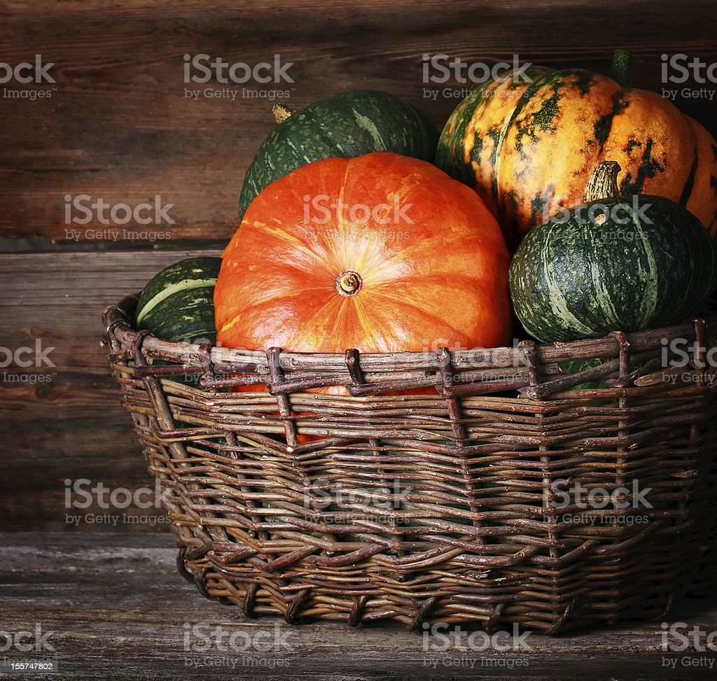 Harvested pumpkins royalty-free stock photo