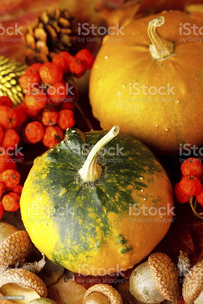 Harvested pumpkins with fall leaves royalty-free stock photo