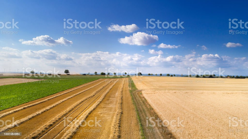 Harvested Wheat Fields Stubble Fields Stock Photo More