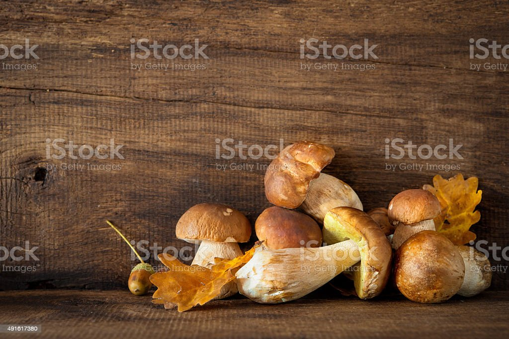 Harvested wild porcini mushrooms stock photo
