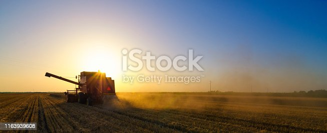 Harvester combine harvesting wheat on summer sunset.