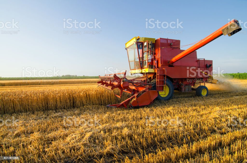Harvester combine harvesting wheat on agricultural field stock photo