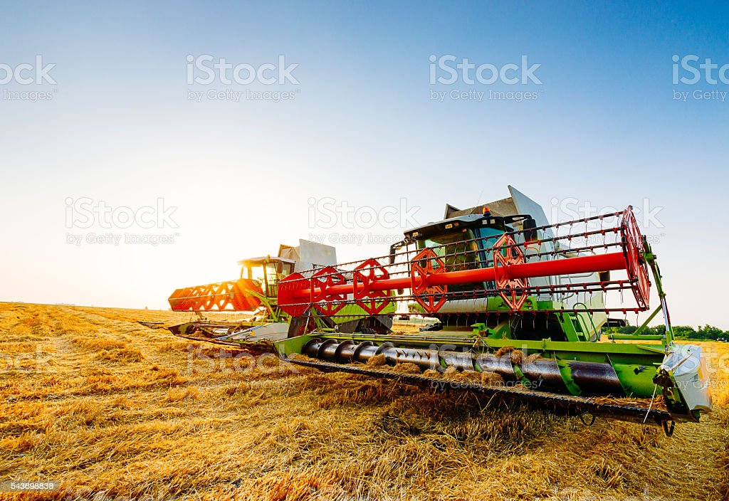 Harvester combine on wheat harvesting in summer stock photo