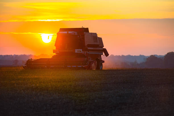 harvester harvesting on the field at sunset stock photo