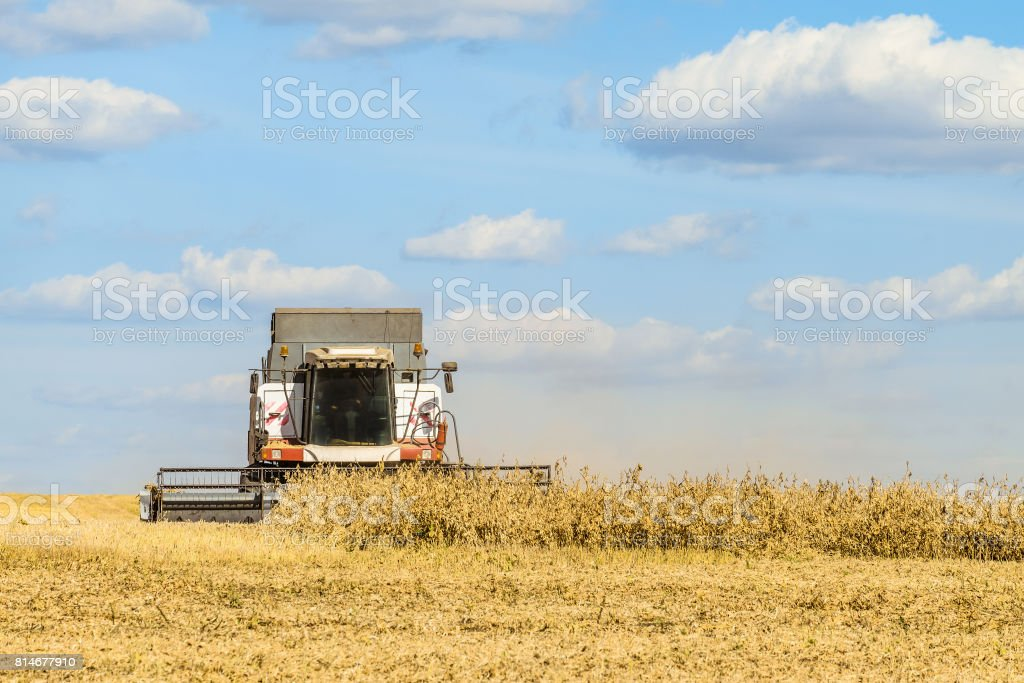 Harvester harvesting works in the field on a sunny day stock photo