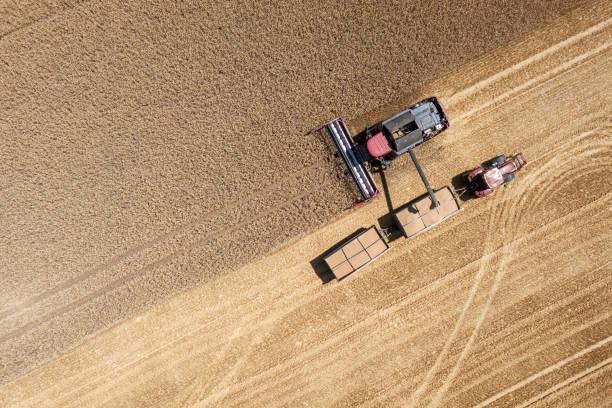 harvester harvests wheat on a field, thuringia, germany - zbierać plony zdjęcia i obrazy z banku zdjęć