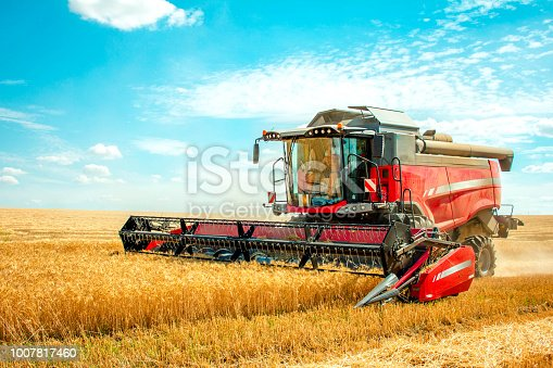 harvester harvests wheat on field
