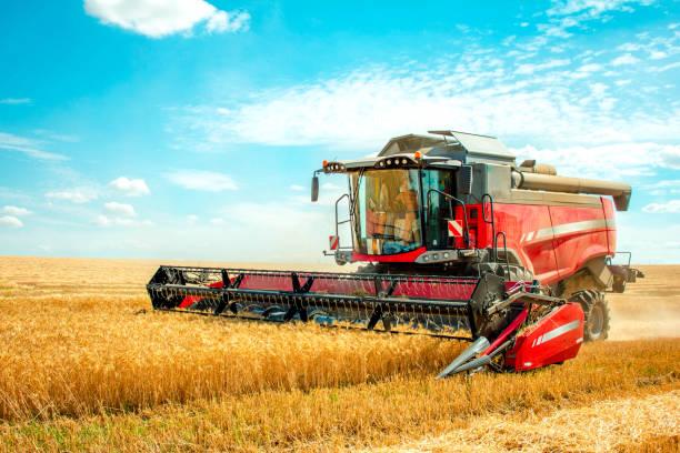 harvester harvests wheat on field - zbierać plony zdjęcia i obrazy z banku zdjęć