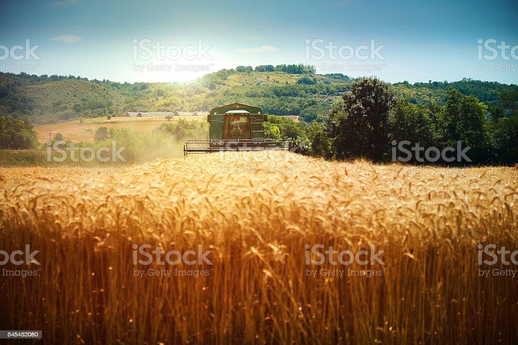 Harvester Maschine Ernte Weizen Feld zu arbeiten – Foto
