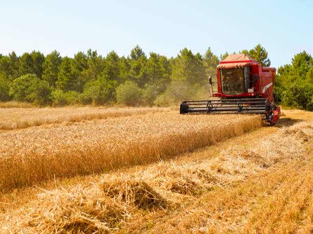 Harvester Harvester in wheat field agricultural equipment stock pictures, royalty-free photos & images