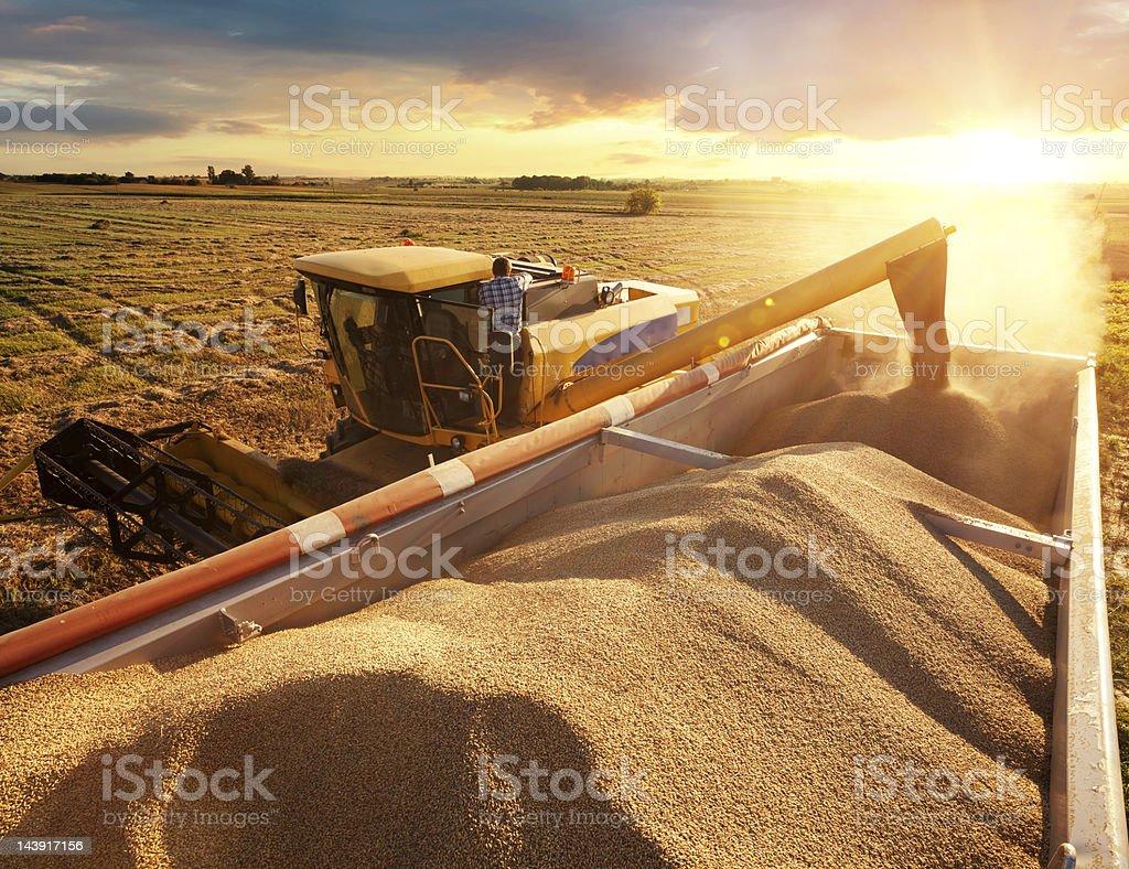 Harvester royalty-free stock photo