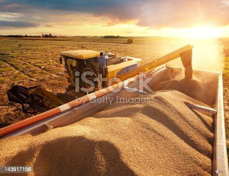 Harvest - abundant harvest