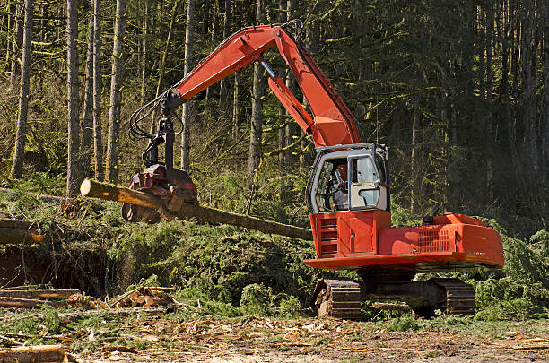 harvester - logging equipment stock photos and pictures