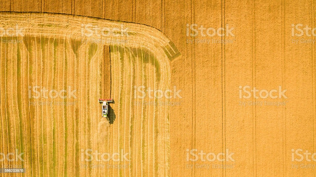 Harvester working in field and mows wheat. Ukraine. Aerial view. stock photo