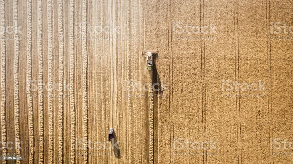 Harvester working in field and mows wheat. Ukraine. Aerial view. royalty-free stock photo