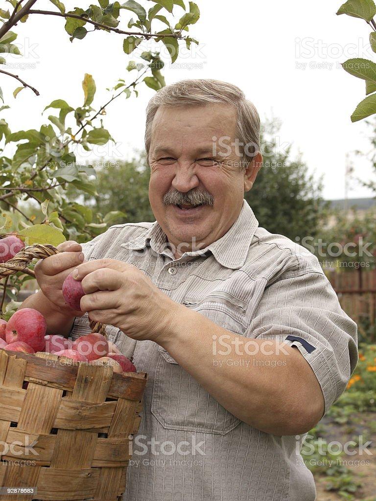 Harvesting a apple royalty-free stock photo