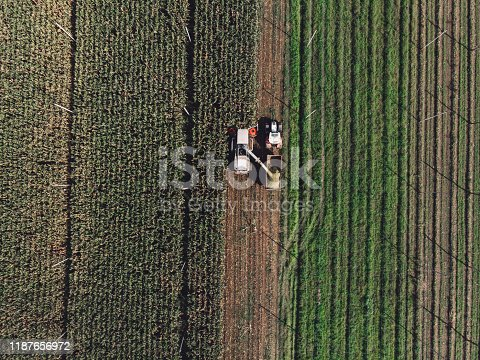 View from the air, side view of the corn field in the country side of Slovenia. Combine harvester harvesting the corn, tractor driving along the combine to collect the harvest.