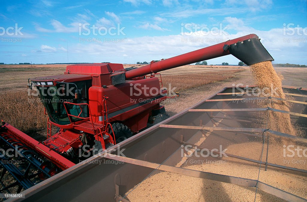 Harvesting a Field of Soybeans With a Combine Harvester. stock photo