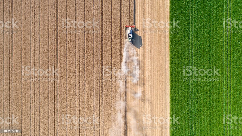 Harvesting a wheat field, dust clouds stock photo