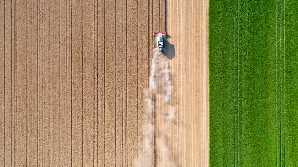 harvesting a wheat field, dust clouds - quinta imagens e fotografias de stock
