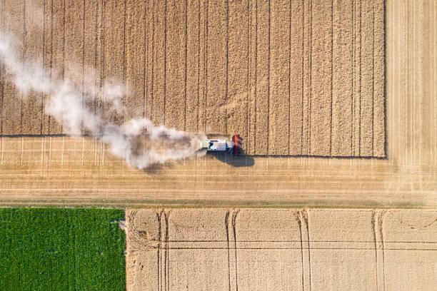Ernte ein Weizenfeld, Staubwolken – Foto