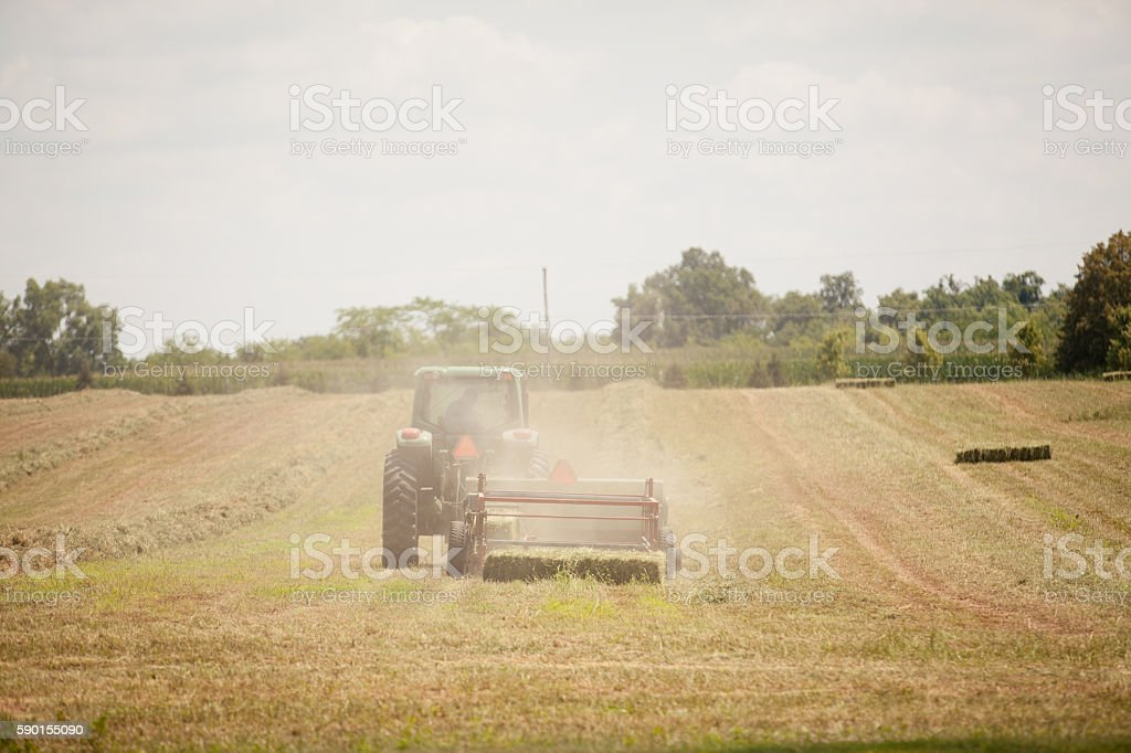 Harvesting Alfalfa Hay stock photo