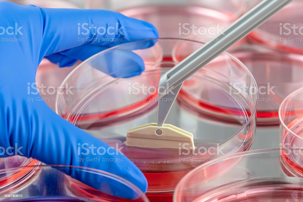 Harvesting cells with a cell scraper stock photo