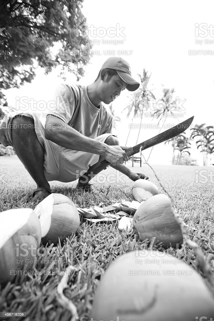 Harvesting coconuts on Coatepeque (Crater lake) in El Salvador stock photo