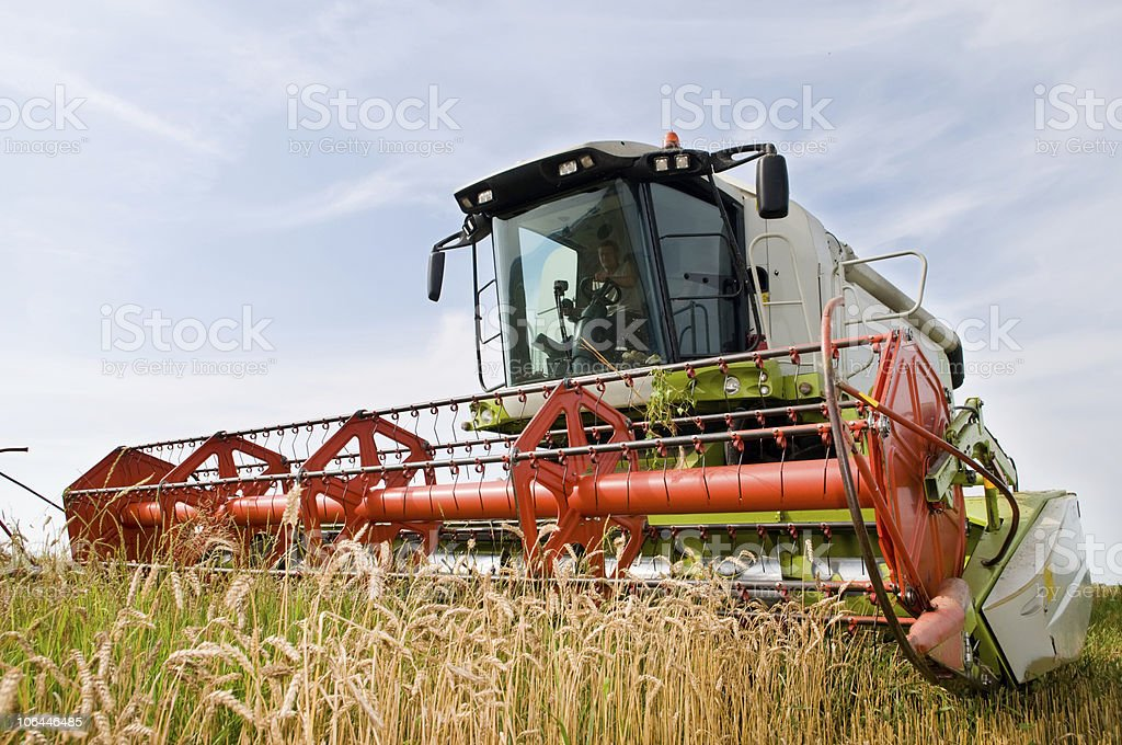 harvesting combine in the wheat field royalty-free stock photo