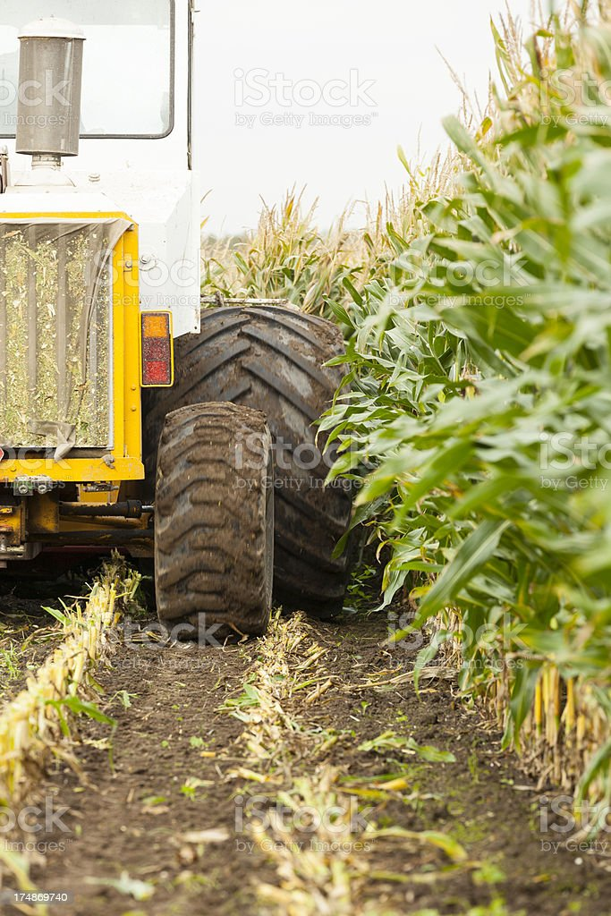 Harvesting corn for silage stock photo