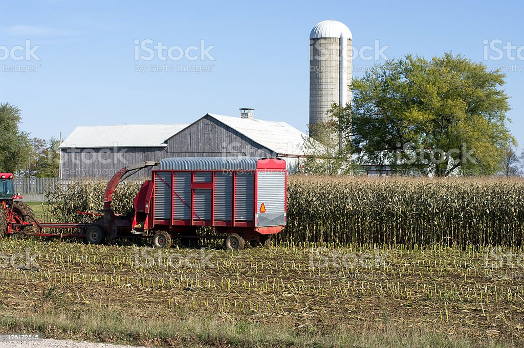 Harvesting Corn for Silage royalty-free stock photo