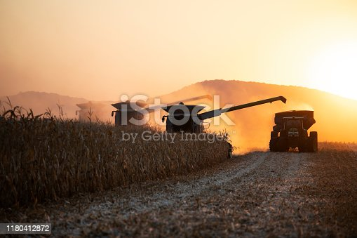Combines and tractor machines harvesting corn at sunset on agriculture fields.