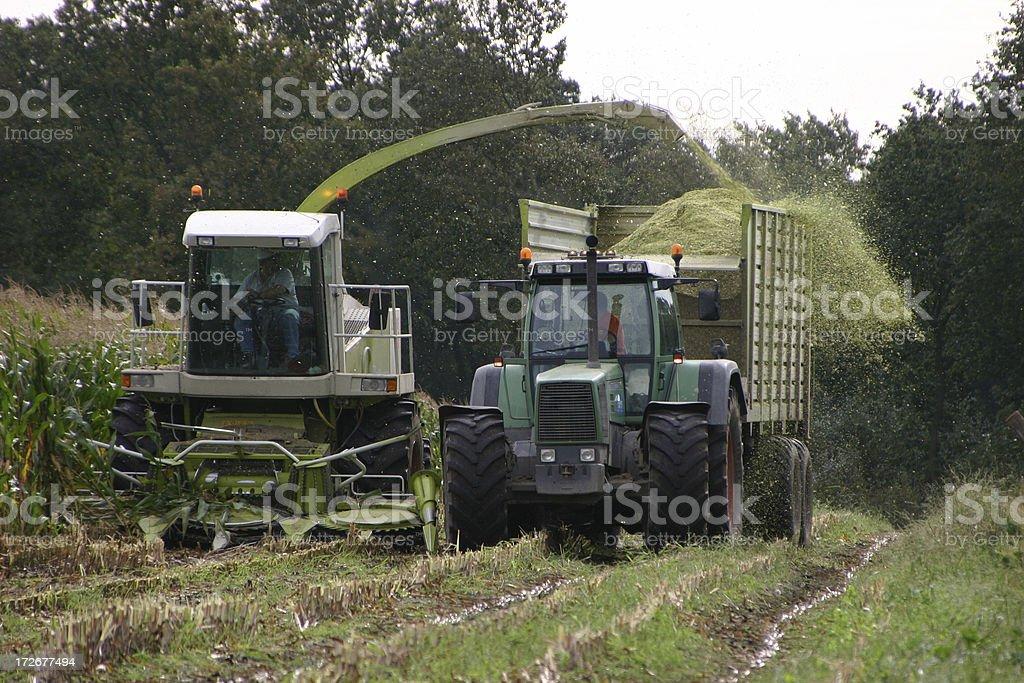 Harvesting Corn stock photo